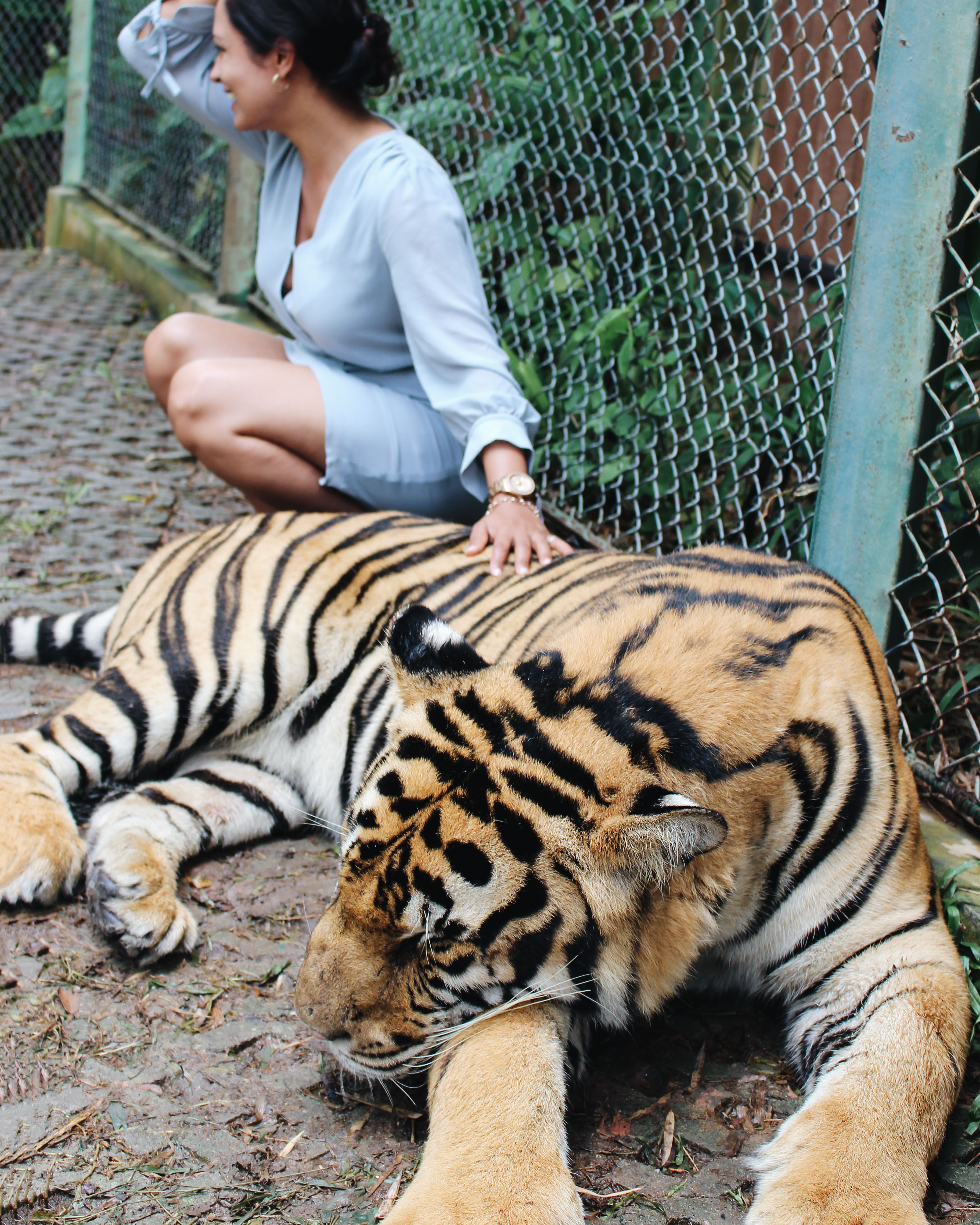 Tiger Kingdom, Phuket Thailand