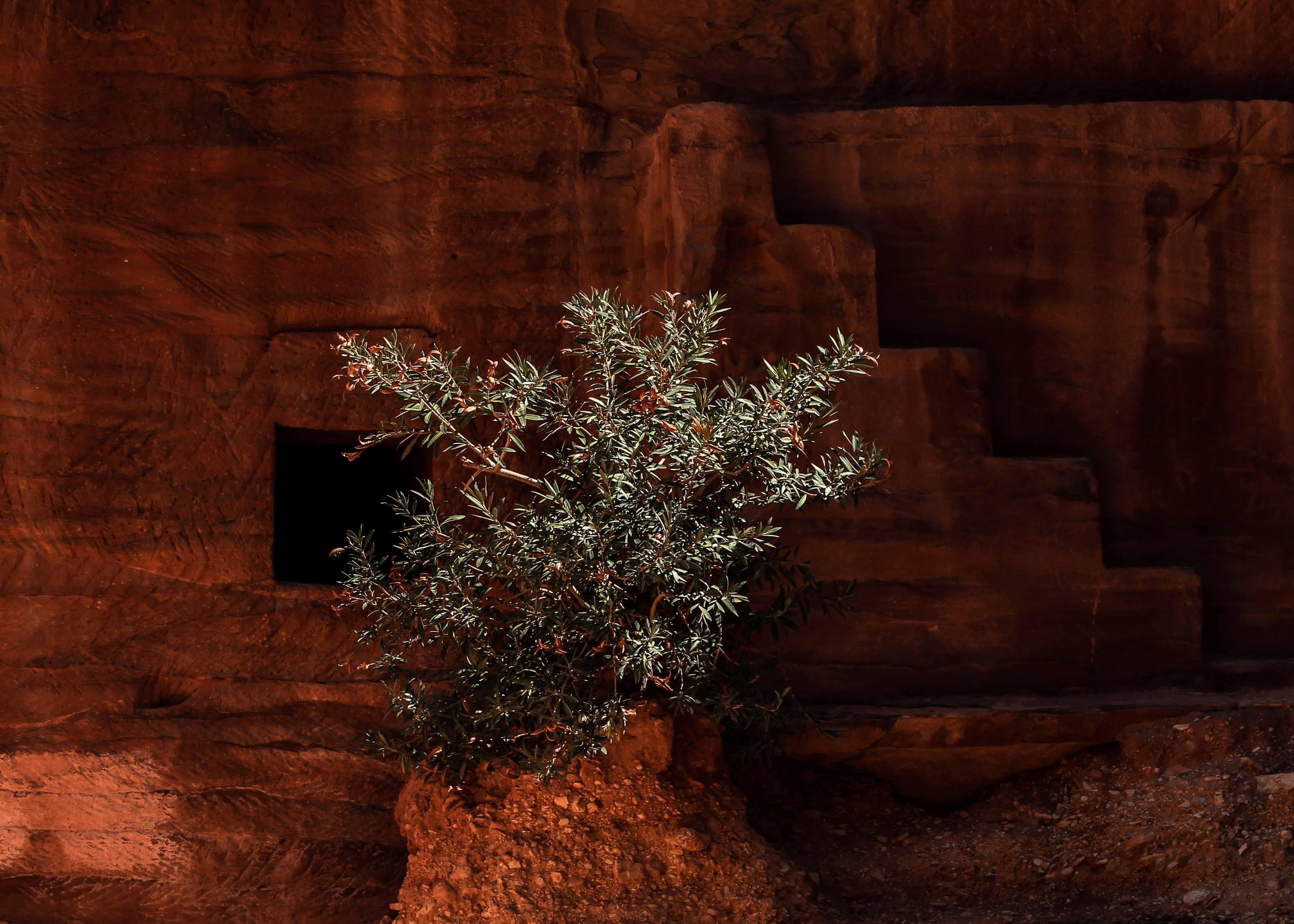 Petra sandstone architecture